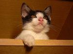 オスの仔猫です。飼っていただける方を探しています。